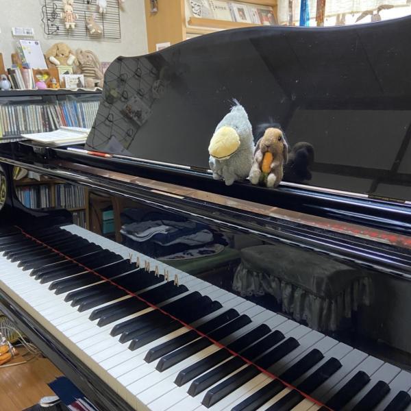 小川音楽教室さんのプロフィール