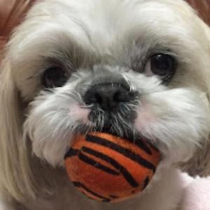愛犬を看取るということ〜be with my dog〜