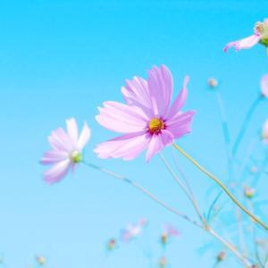 その小さな花のように