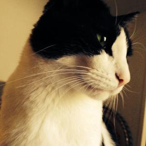 猫とわたしのカリフォルニア・ライフ