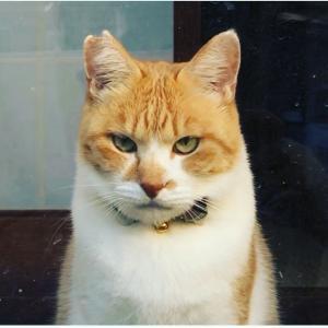 元野良猫チャチャとRme
