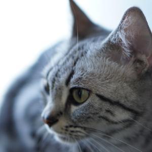 猫とのひと時