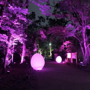 京都 下鴨神社「糺の森の光の祭り」Art by teamLab-TOKIOインカラミ