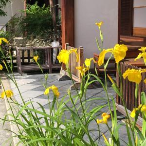京都 西院「春日神社」散歩