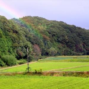 大豆畑から、虹が生えていた^^