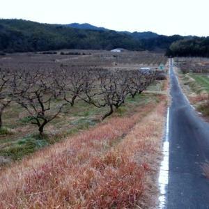 柿畑へ行ってきました。