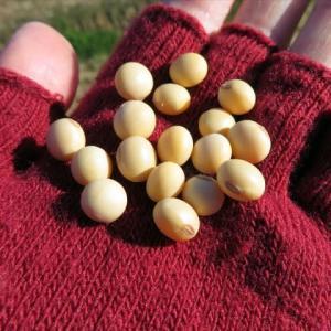大豆の種まきから、今日の晩のチンまで