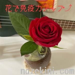 【免疫力をあげる】赤い色と花のお話【偉人たちの健康診断】からお知恵拝借