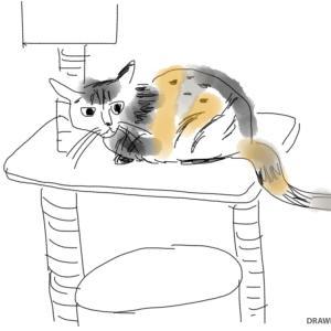 いろいろ日記その6~猫のこと