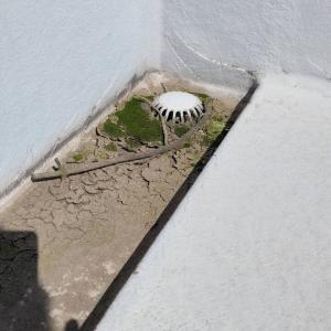 【画像】屋上の10年分積もった土やチリや枝や苔