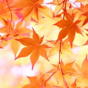 高尾山で自然とふれあいながら秋の散策!