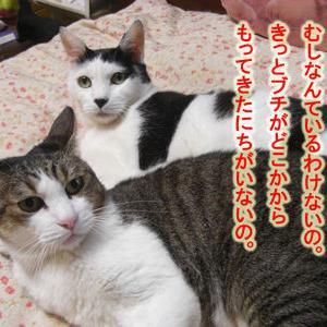 10月6日 お尻の災難2連発