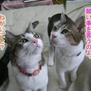 (358)笹に願いを