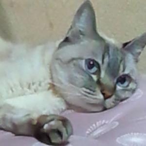(17)ペットの病気の心的感染