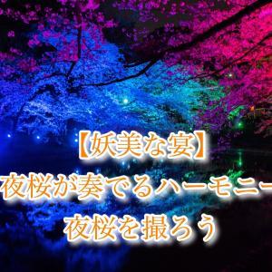 【妖美な宴】夜桜が奏でるハーモニー:夜桜を撮ろう!!