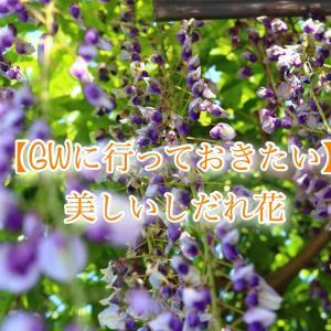 【GWに行っておきたいフォトスポット】美しきしだれ花