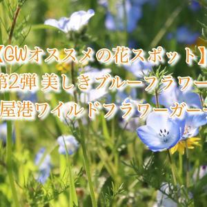 【GWオススメの花スポット】第二弾:美しきブルーフラワー in名古屋港ワイルドフラワーガーデン