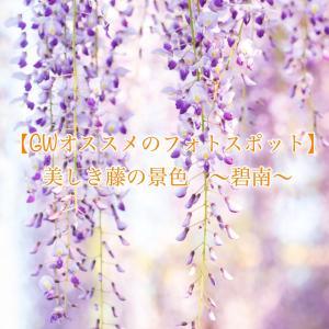 【GWオススメのフォトスポット】美しき藤の景色 〜碧南〜