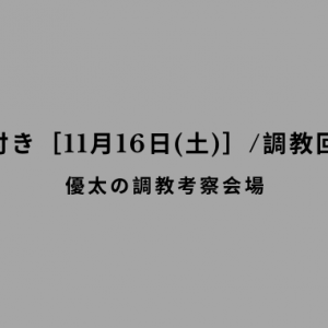 【調教の気付き[11月16日(土)]/調教回顧その61】