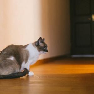 【猫のひっかき傷対策】壁紙保護シートを張ってみたら効果抜群!