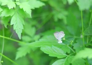 蝶々さん達の舞