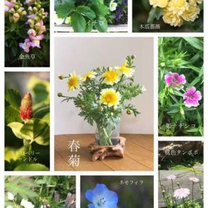 春菊のお花って見たことありますか?