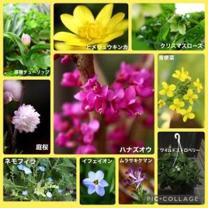 花達のコラージュ🌸✨とモグラ対処法🍄