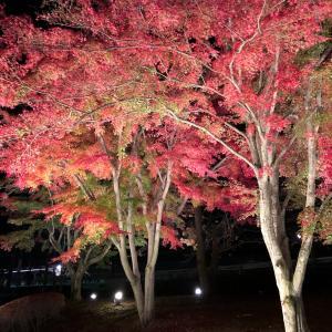 岐阜県土岐市 曽木公園紅葉ライトアップレポ♪