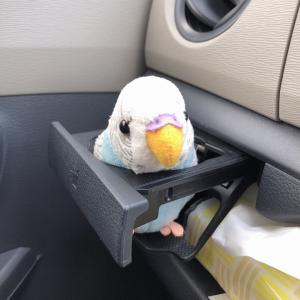 ドライブのお供は