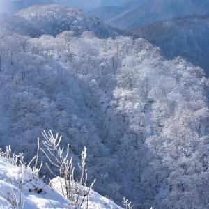丹沢に霧氷輝く