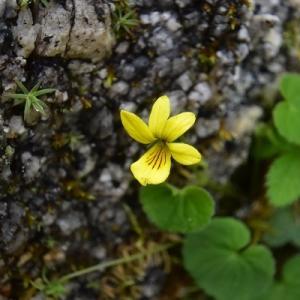 鳳凰山に咲く花
