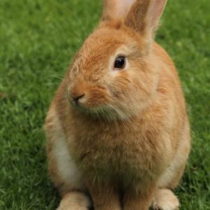 「ウサギ」メインモチーフ作品特集