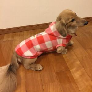 犬にも人間にも優しい犬の洋服の作り方は?