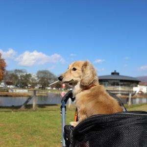 犬と旅行に一緒行くための準備とは?~電車移動の練習など~