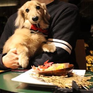 軽井沢で犬と一緒に泊まることが出来るホテル~レジーナリゾート旧軽井沢~(2)(食事編)