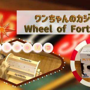 ワンちゃんのカジノ!知育玩具Wheel of Fortune(ガラガラポン)を使って遊んでみた