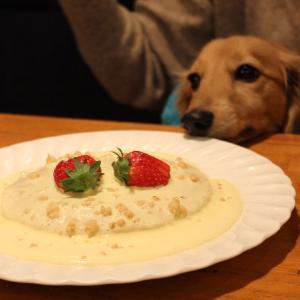 自由が丘で犬と一緒に室内でランチ出来るレストラン~カスタネット~