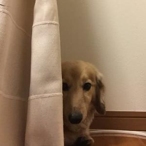 犬のしつけ~噛み癖~