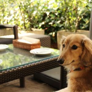 代官山で犬と一緒にカフェ出来るレストラン~IVY PLACE~