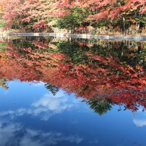 犬と一緒に軽井沢の紅葉観光~雲場池の紅葉は凄かった!~