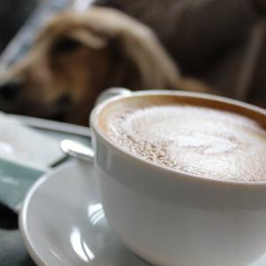 代官山で犬と一緒に店内でランチ出来るレストラン~カフェ・ミケランジェロ~
