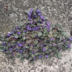 岩の間に咲く花が教えてくれたこと