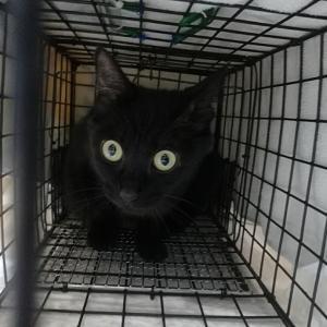拡散希望です!迷子の黒猫さん情報です!