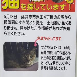 拡散希望です!迷子猫さんの情報です!