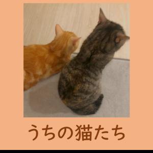 ★猫画像付き★猫の行動で何を思っているのか解読した★803号室の日常