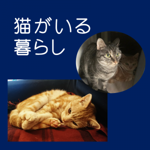 【癒し画像⑦】うちの2猫とちょっと愚痴(笑)アラフォー女子の本音。。。