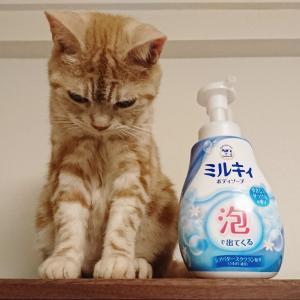 牛乳石鹸ミルキィボディーソープ泡タイプを使ってみた感想★スッキリなのに乾燥しなくて良い♪