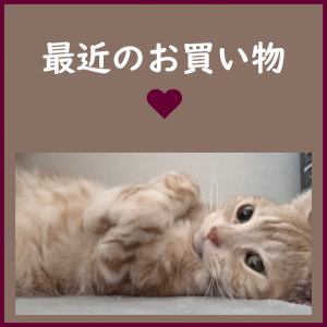 ミニマリストのお買い物★大好きなお花★ドライフラワー&香水★猫の癒し画像と共に~