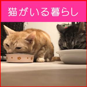 都内在住アラフォーOLのなんてことない2猫との生活☆うちの猫の癒し画像⑨