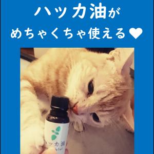 「ハッカ油」が超使える!使用方法8例紹介★ミニマム生活にピッタリ!